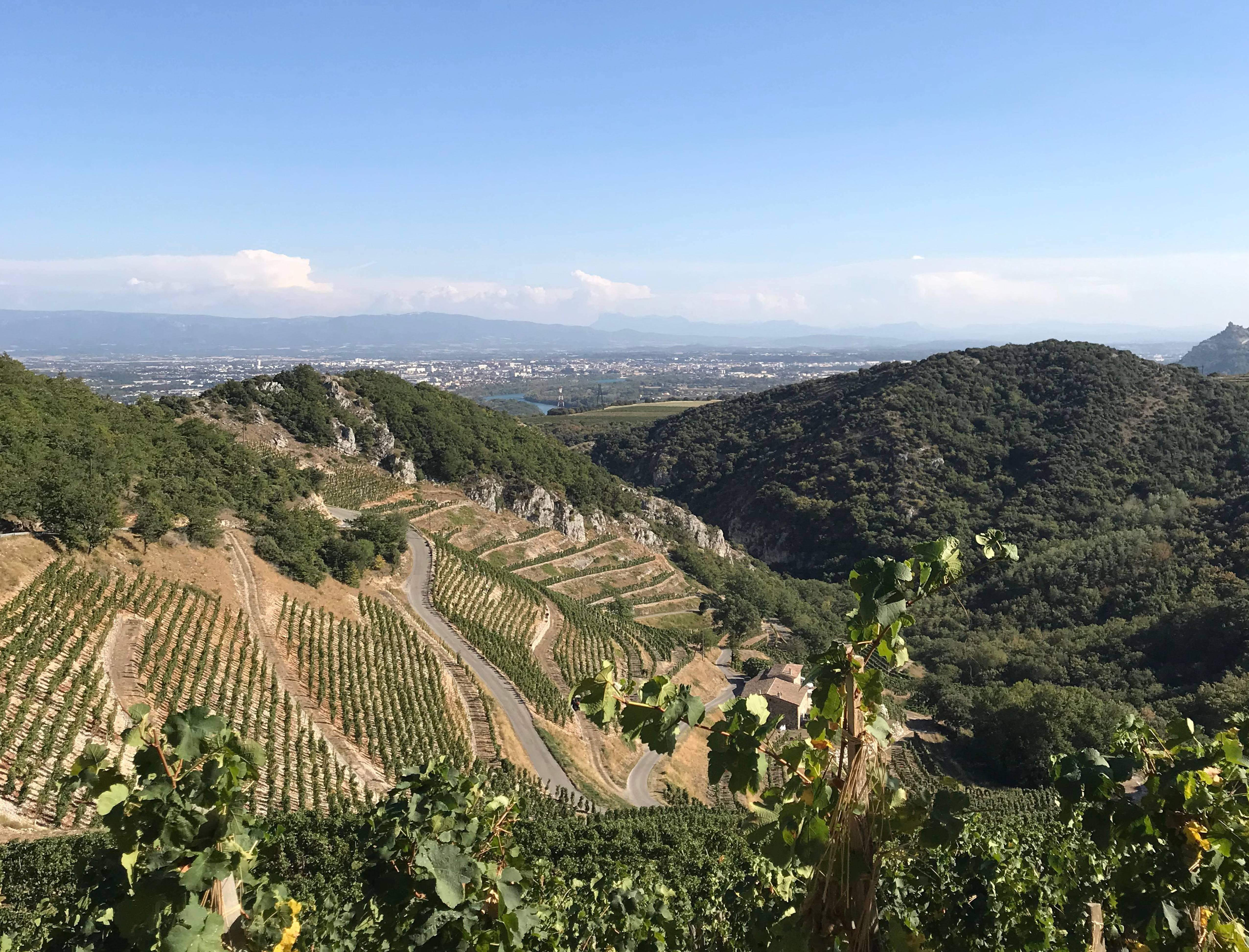 Les royes (vignoble de l'AOC Saint-Joseph) à Châteaubourg