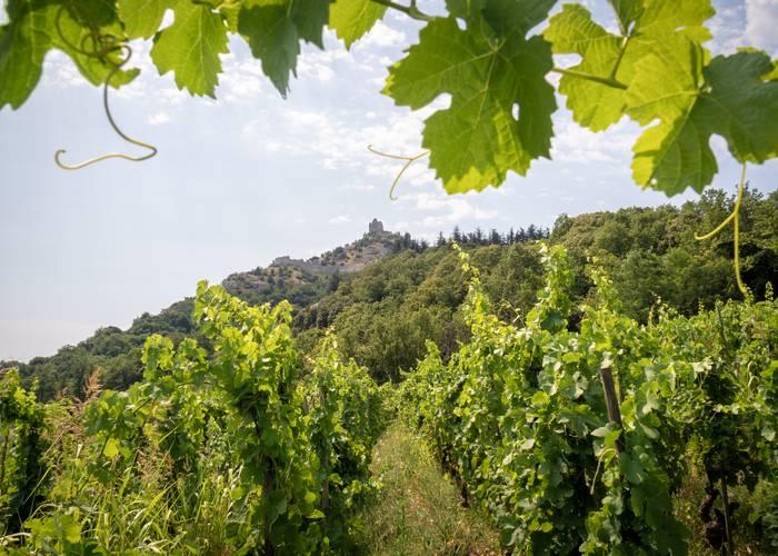Vignoble de Saint-Péray