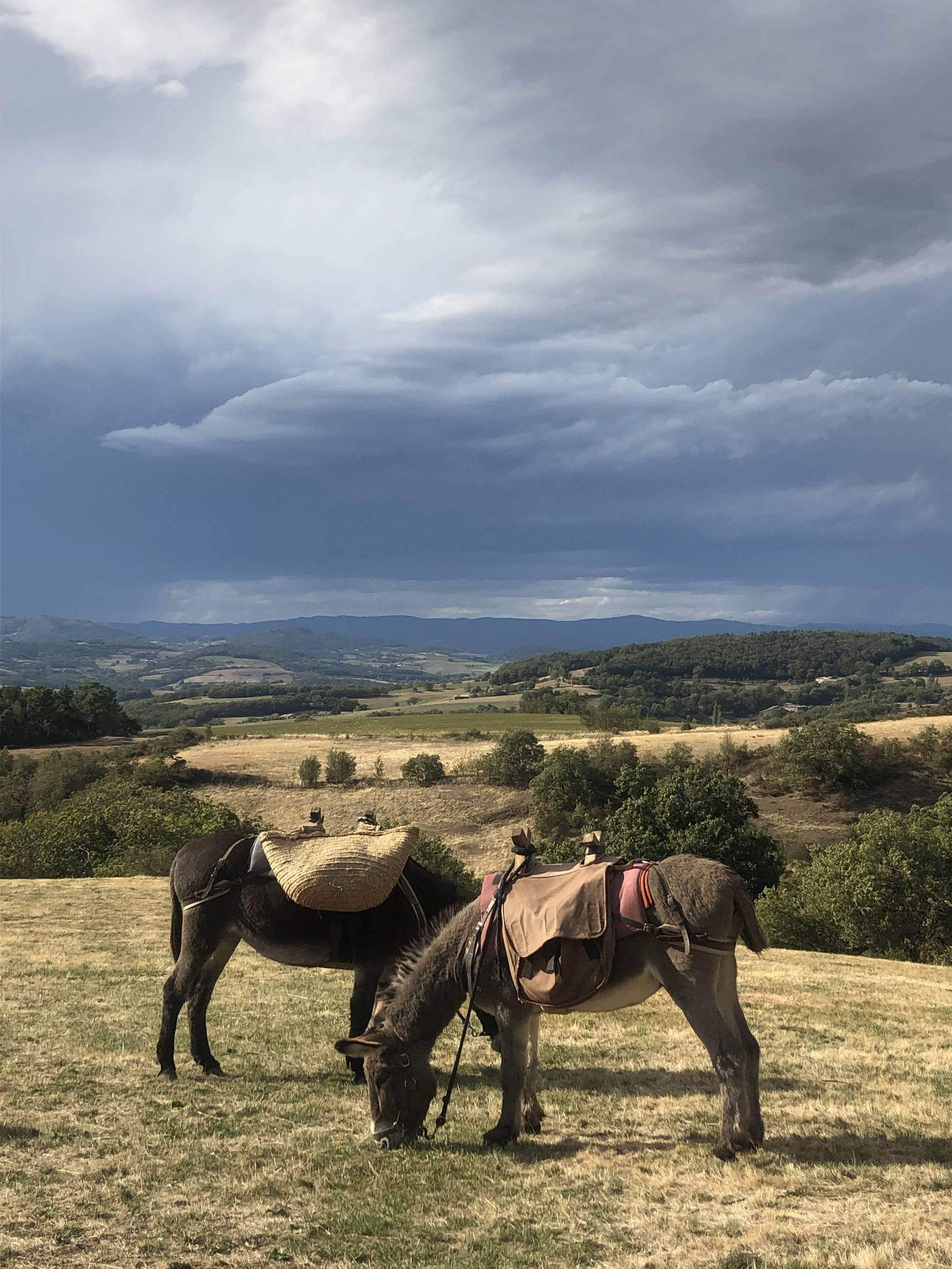 Rando avec des ânes